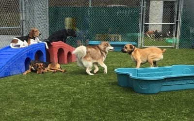 Turf can increase your dog daycare business. Find out how