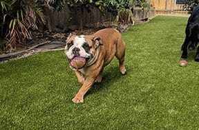 Financing your synthetic grass project