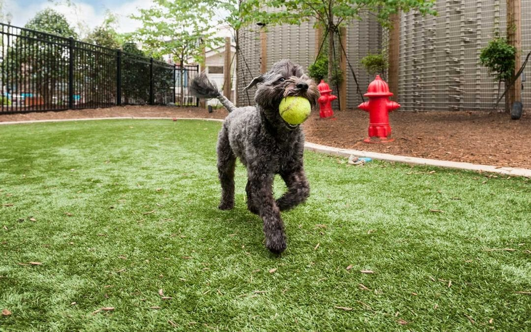 How durable is artificial turf for my dogs? Will they rip it up?