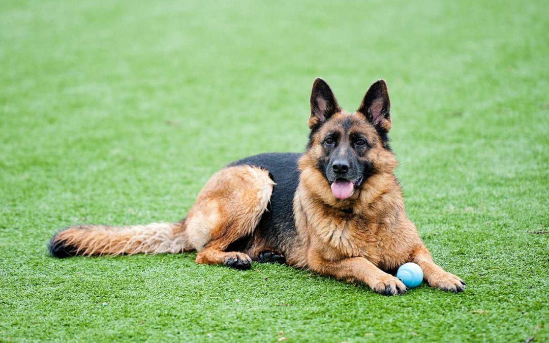 Will turf get too hot for my pet in the warmer months?